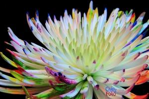 flower tips
